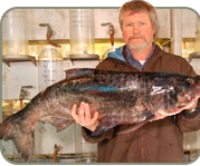 DNR staffer holds bighead carp