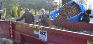 Anoka rotary collects leaves