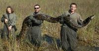 Burmese python caught in 2009