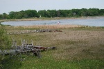 Dry land where White Bear Lake shallows used to be